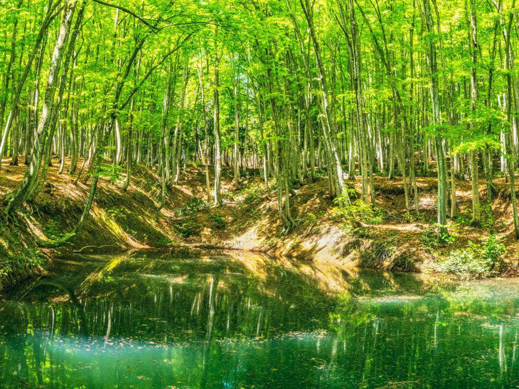 松之山美人林